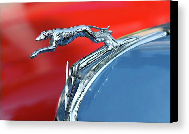 Greyhound Canvas Print featuring the photograph Racer by Rebecca Cozart