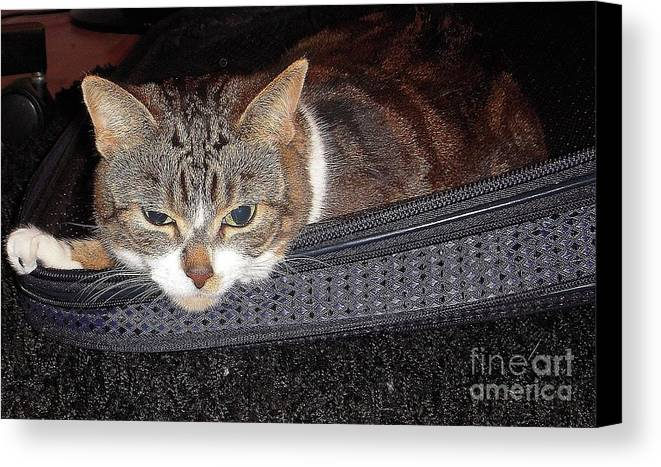Cat Canvas Print featuring the photograph Ready For A Trip by Vesna Antic