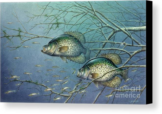 Jon Q Wright Canvas Print featuring the painting Tangled Cover Crappie II by Jon Q Wright
