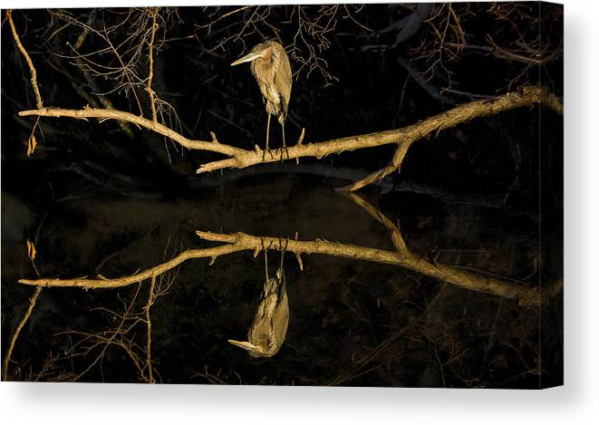 Nature Canvas Print featuring the photograph Heron Mirror On Maryland Canal by Francis Sullivan