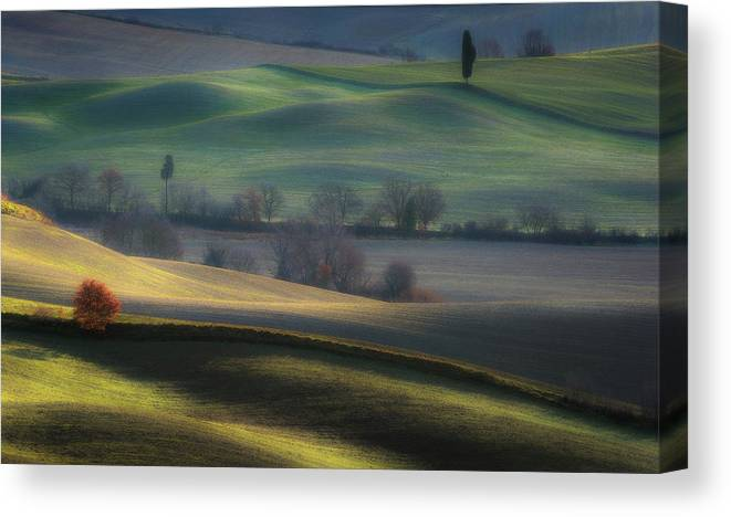 Cypress Canvas Print featuring the photograph Light Transition by Marek Boguszak