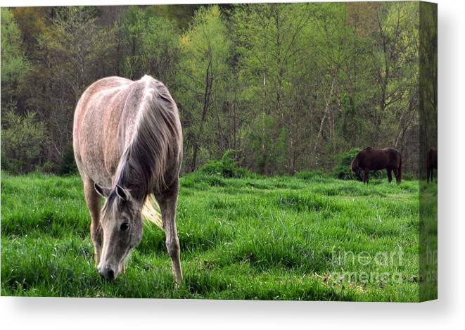 Horses Canvas Print featuring the photograph Peaceful Pasture by Lydia Holly