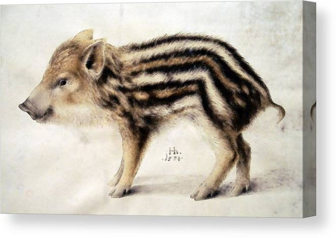 Hans Hoffmann Canvas Print featuring the painting A Wild Boar Piglet by Hans Hoffmann