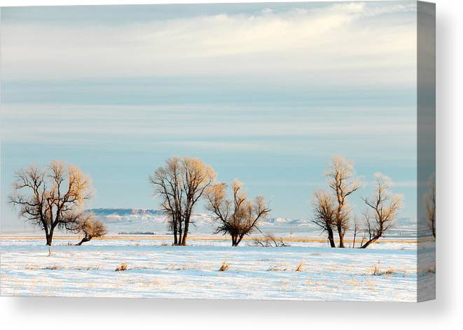 Horizontal Canvas Print featuring the photograph Desperate Trees by Todd Klassy
