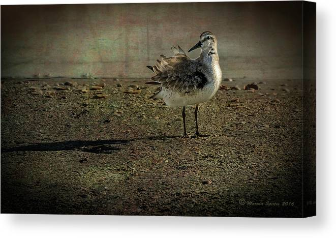 Redington Beach Canvas Print featuring the photograph Looking Pretty by Marvin Spates