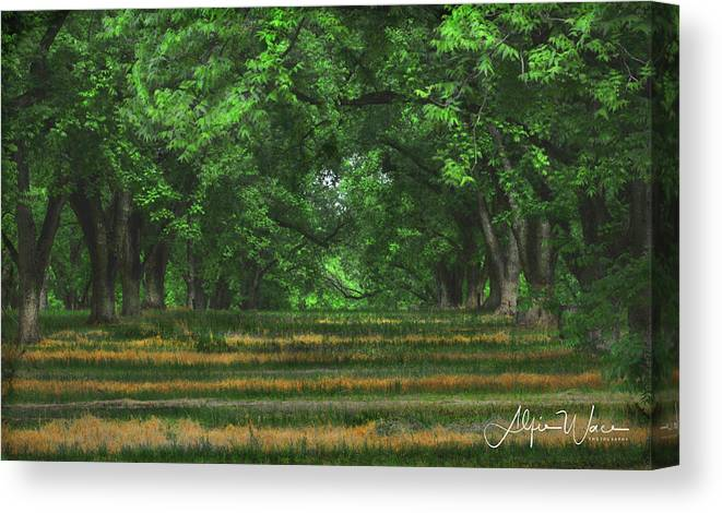 Landscape Canvas Print featuring the photograph Swirls And Stripes by Alfie Wace