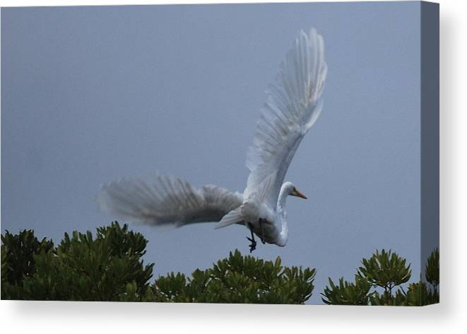 Aviary Canvas Print featuring the photograph Takin' Off by John Roncinske