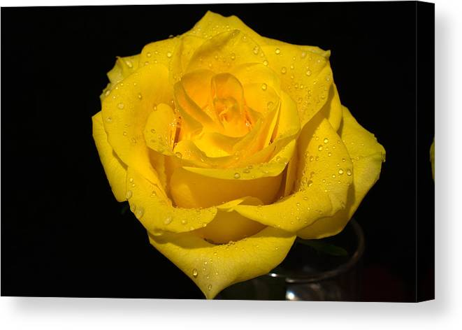 Flowers Canvas Print featuring the photograph Yellow Rose - Friendship,joy,good Health by Peterson Photography