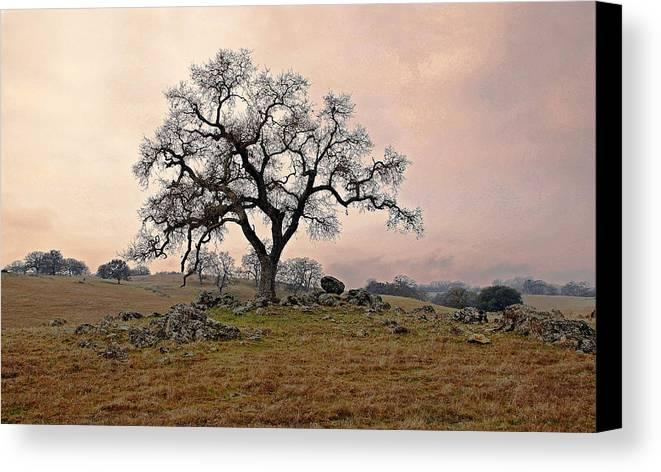 Landscape Canvas Print featuring the photograph Amador Oak by M Ryan