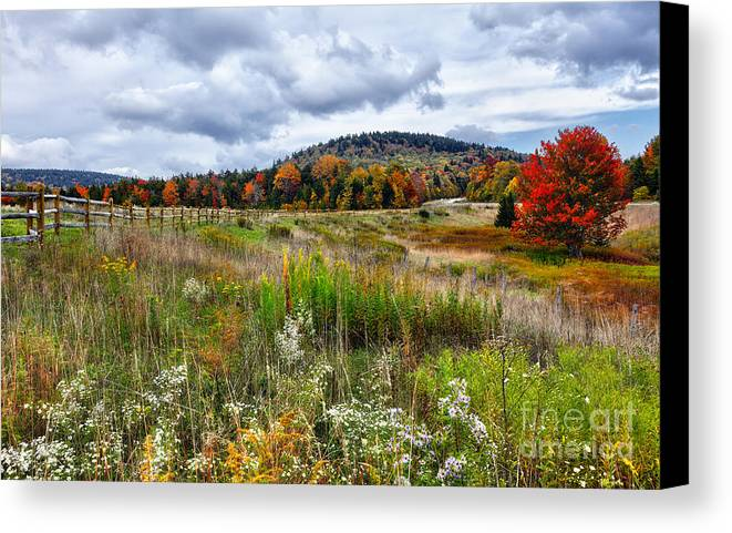 Fall Colors Canvas Print featuring the photograph August Fall Colors Flowers And Trees I - West Virginia by Dan Carmichael