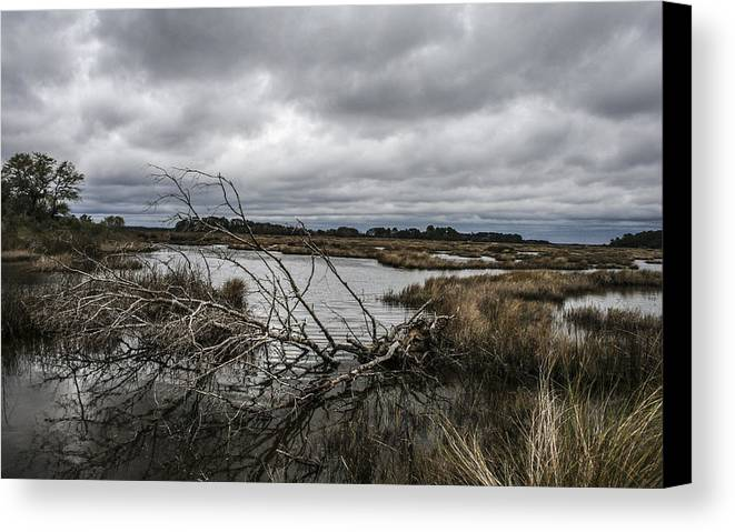 Landscape Canvas Print featuring the photograph Beautifully Fallen by Steven Taylor