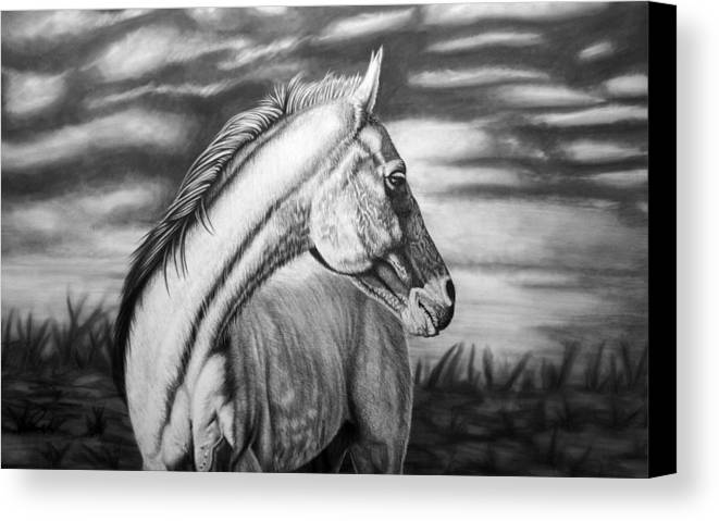 Canvas Canvas Print featuring the drawing Looking Back by Glen Powell