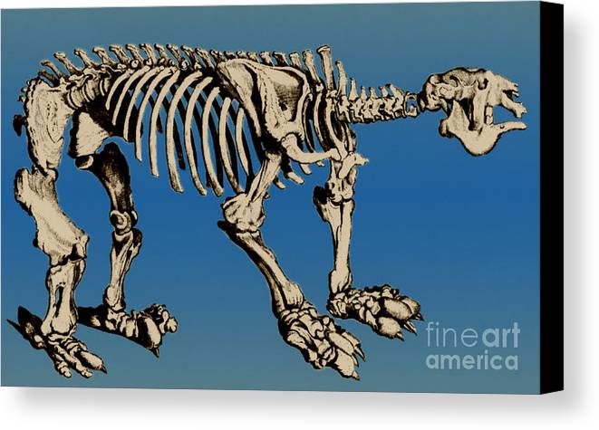 History Canvas Print featuring the photograph Megatherium Extinct Ground Sloth by Science Source