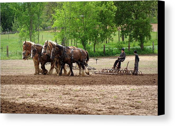 Amish Canvas Print featuring the photograph Easy Rider by Linda Mishler