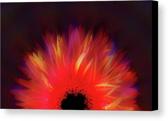 Avantgarde Canvas Print featuring the photograph Feathered Floral by Li  van Saathoff