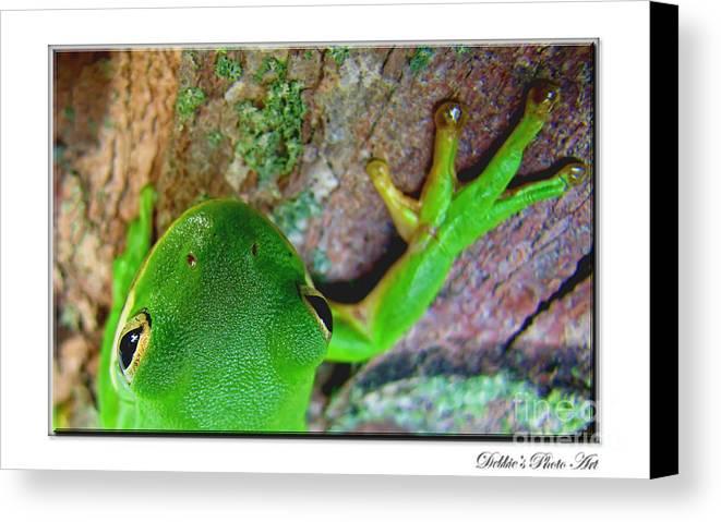 Nature Canvas Print featuring the photograph Kermit's Kuzin by Debbie Portwood