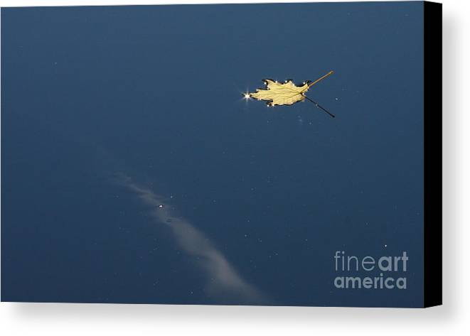 Fall Canvas Print featuring the photograph Lonely Leaf by Brenda Doucette