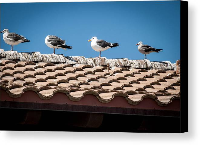 Seagull Canvas Print featuring the photograph Waiting For Take Off by Cathy Smith