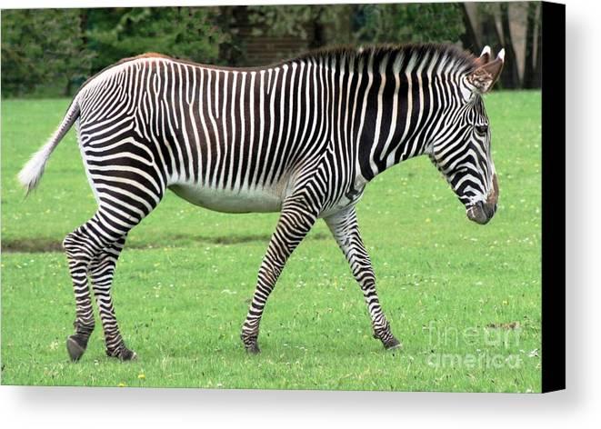 Zebra Canvas Print featuring the photograph Zebra by Ruth Hallam