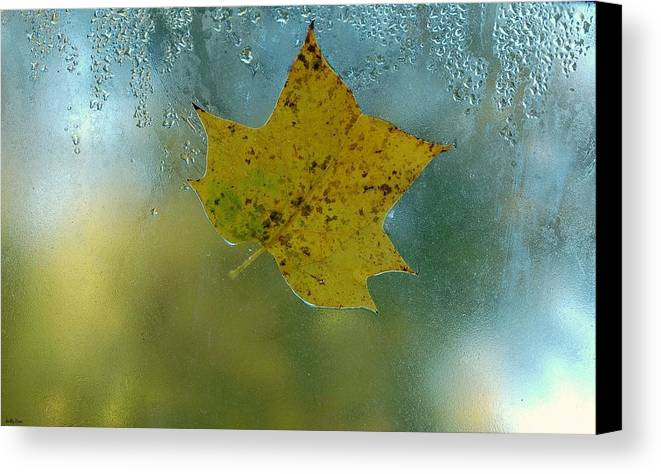 Autumn Canvas Print featuring the photograph Autumn Window by Molly Dean