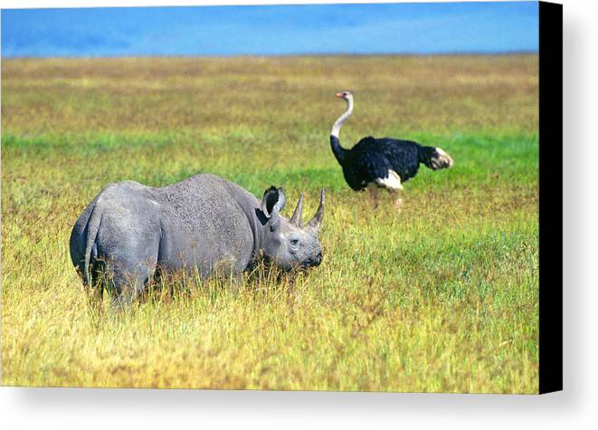 Black Canvas Print featuring the photograph Black Rhinocerous by Buddy Mays