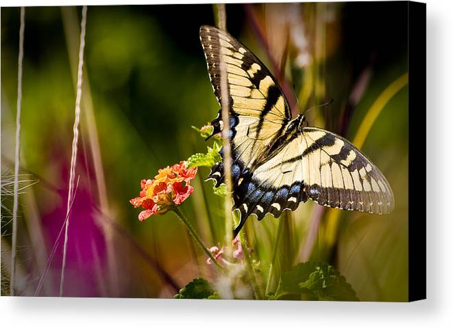 Nature Canvas Print featuring the photograph Butterfly Jungle by Ches Black