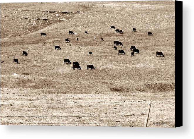 Cows Canvas Print featuring the photograph Cow Droppings by Susan Kinney