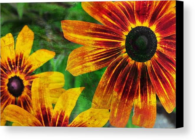 Flower Canvas Print featuring the photograph Gloriosa Daisy by JAMART Photography