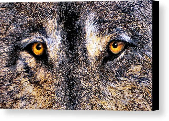 Wolf Eyes Canvas Print featuring the print Just Watching Wolf by JoLyn Holladay