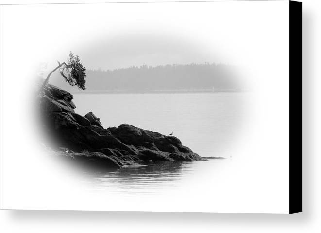 Black Canvas Print featuring the photograph Lonley Gull by J D Banks
