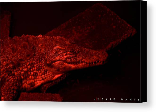 Alligator Canvas Print featuring the photograph Said Dante by Jonathan Ellis Keys