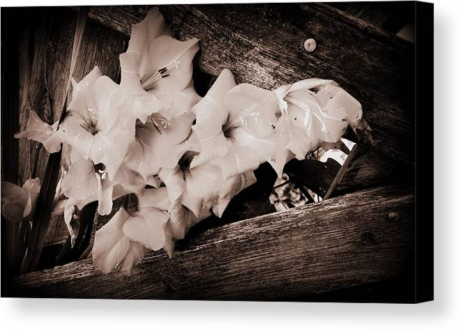 Flowers Canvas Print featuring the photograph Through The Fence by Diane Reed