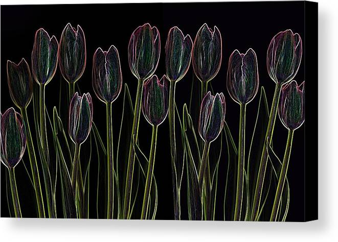 Scanography Canvas Print featuring the digital art Velvet Tulips by Deborah J Humphries