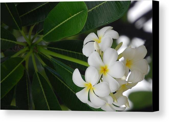 Flowers Canvas Print featuring the photograph White Cluster by Lakida Mcnair