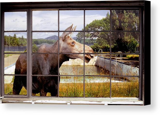 Moose Canvas Print featuring the photograph Window - Moosehead Lake by Peter J Sucy
