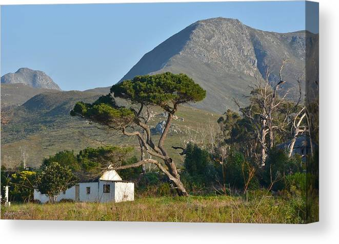 Landscape; Little; Farm House; Mountains; Kleinmond; Pine Tree; Green; Blue; Sky; South Africa; Trees; Farmland; Rural; Texture; Canvas Print featuring the photograph Landscape by Werner Lehmann