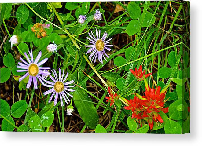 Asters And Scarlet Paintbrush On Trail To Swan Lake In Grand Teton National Park Canvas Print featuring the photograph Asters And Scarlet Paintbrush On Swan Lake Trail In Grand Teton National Park-wyoming by Ruth Hager