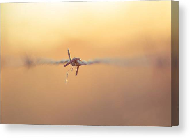Wire Canvas Print featuring the photograph Barbed by Rhonda Stansberry