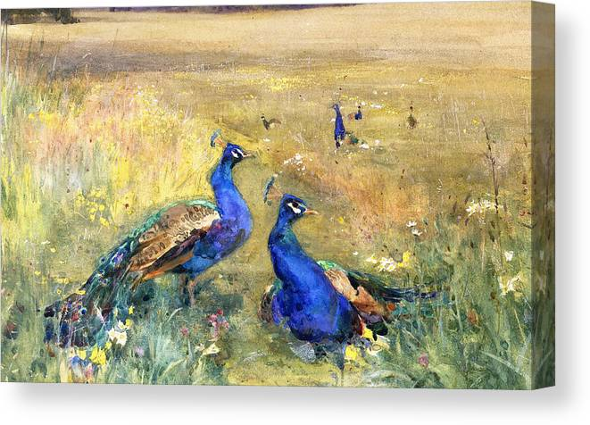 Peacock Canvas Print featuring the painting Peacocks In A Field by Mildred Anne Butler
