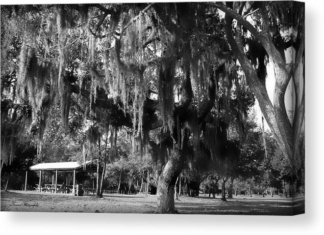 Oak Canvas Print featuring the photograph Under The Oaks by Debra Forand