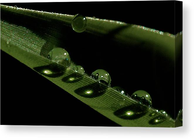 Drops Canvas Print featuring the photograph Bright Drops by David Resnikoff