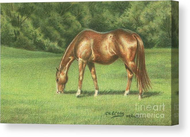 Colored Pencil Canvas Print featuring the drawing Green Pastures by Carrie L Lewis