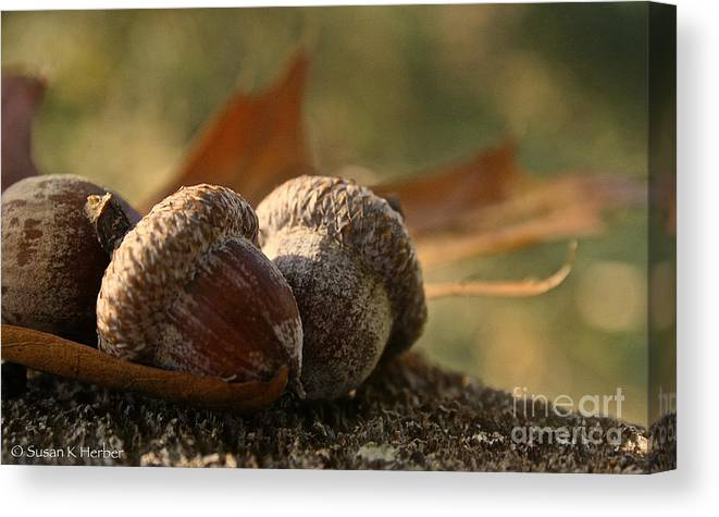Outdoors Canvas Print featuring the photograph Wild Nuts by Susan Herber