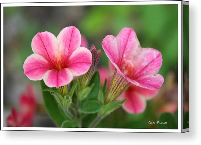 Flowers Canvas Print featuring the photograph A Sunny Afternoon by Linda Sannuti