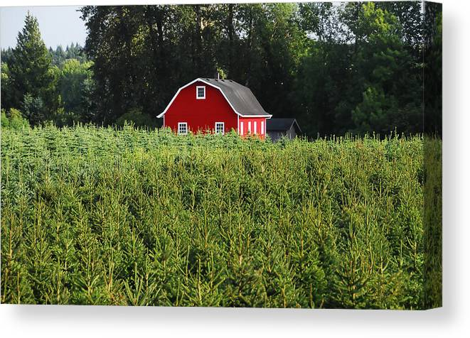 Fine Art Photography Canvas Print featuring the photograph Christmas Tree Farm by David Lee Thompson