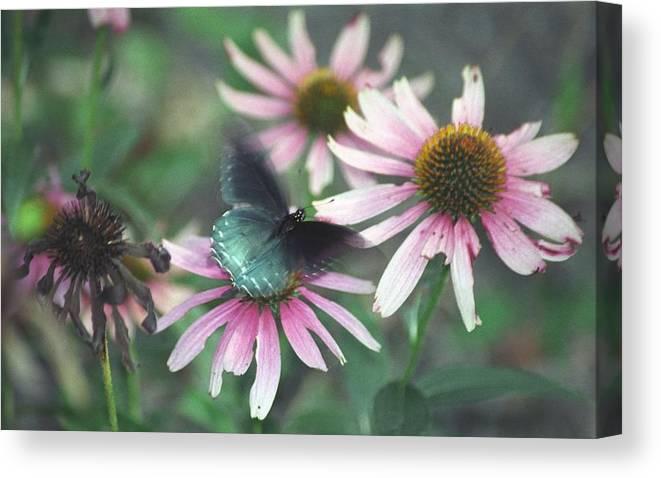 Canvas Print featuring the photograph Dead Flower by Bob Guthridge