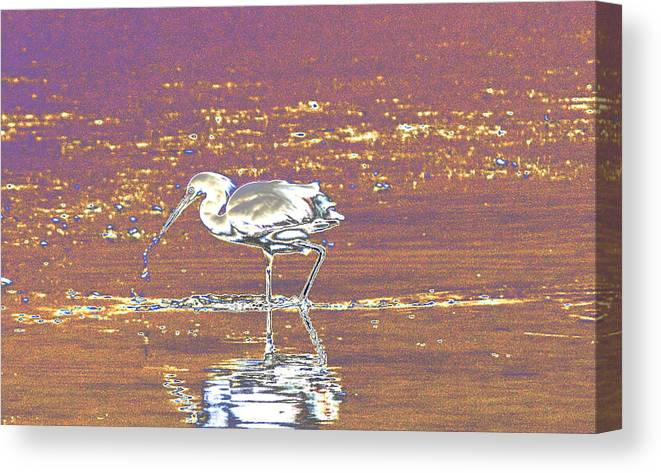 Manipulated Canvas Print featuring the photograph Egret II by John Roncinske