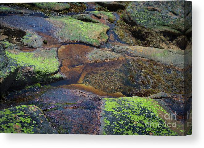 Nature Canvas Print featuring the photograph Nature's Mosaic No. 1 by Skip Willits