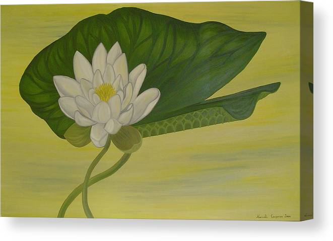 Marinella Owens Canvas Print featuring the painting Nymphaea Alba by Marinella Owens