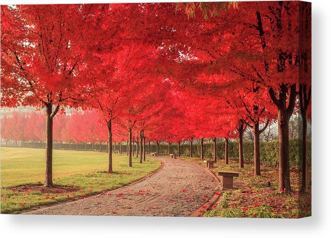 St. Louis Canvas Print featuring the photograph October Dream by Scott Rackers